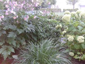 Scheidhammer Herbstblumen